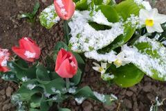 В Одесской области выпал весенний снег