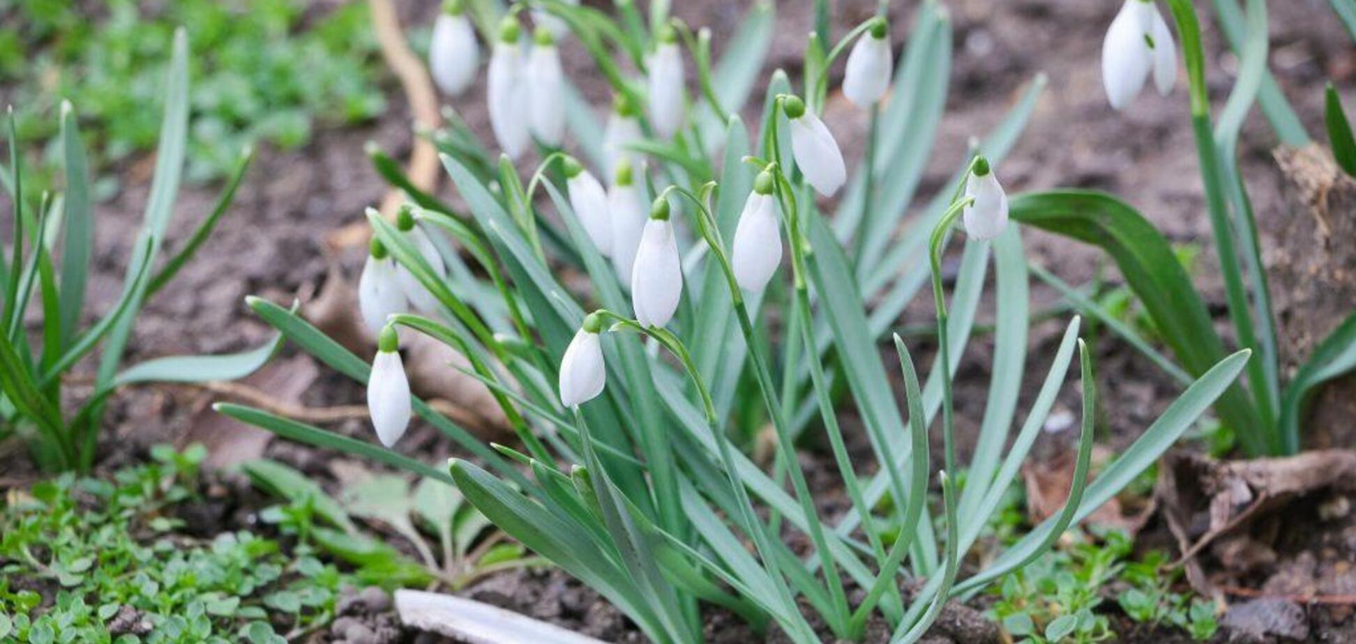 В Одесу прийшла справжня весна