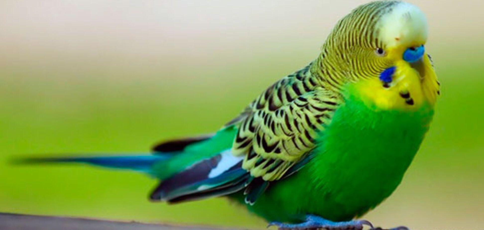 Из Одессы отправили самолетом более тысячи попугаев