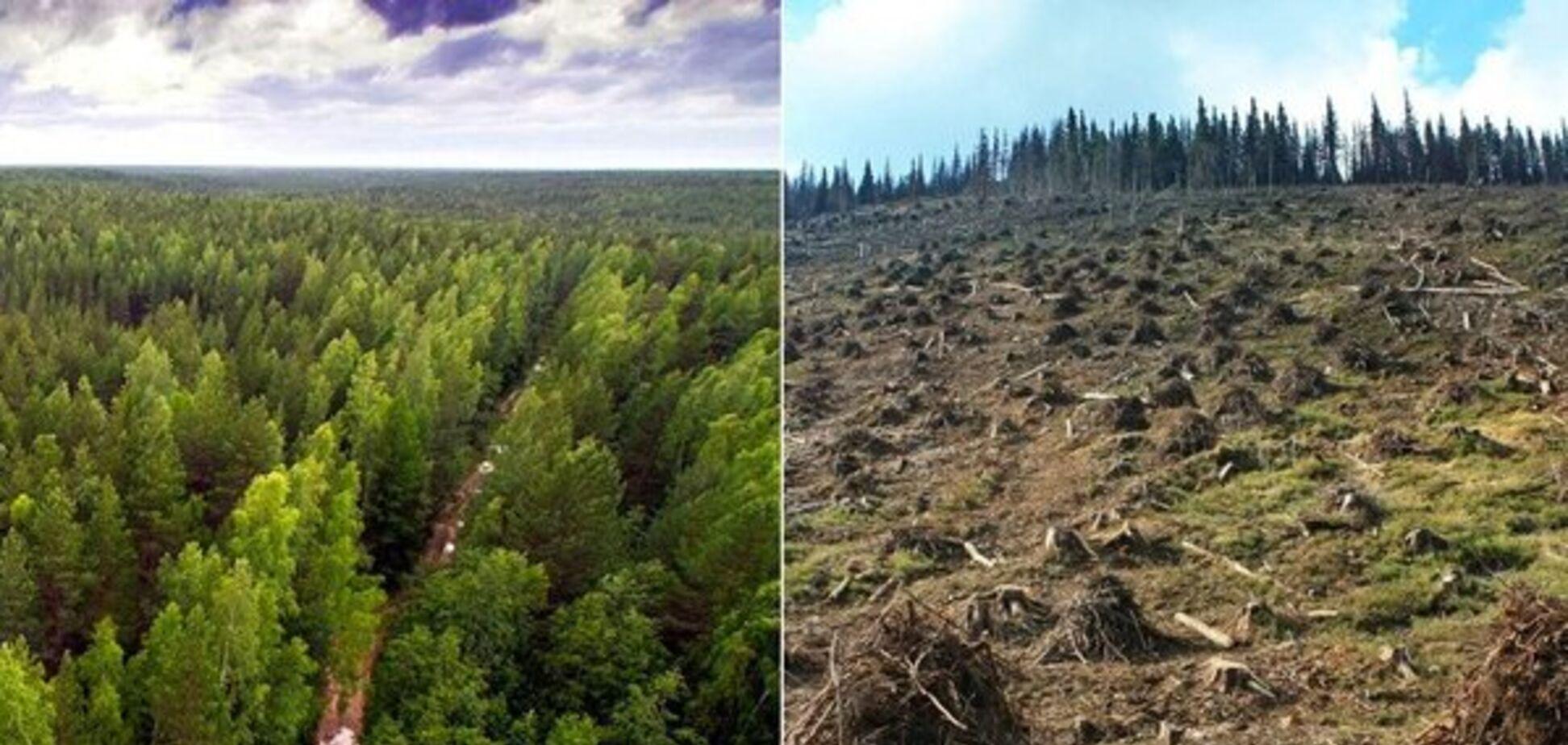 В Україні різко зросла незаконна вирубка лісу: тривожні цифри
