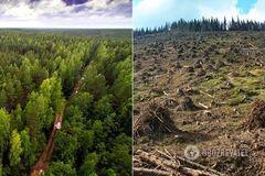 В Украине резко выросла незаконная вырубка леса: тревожные цифры