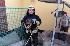 В Днепре чрезвычайники спасли котика с шестиметрового колодца. Милые фото