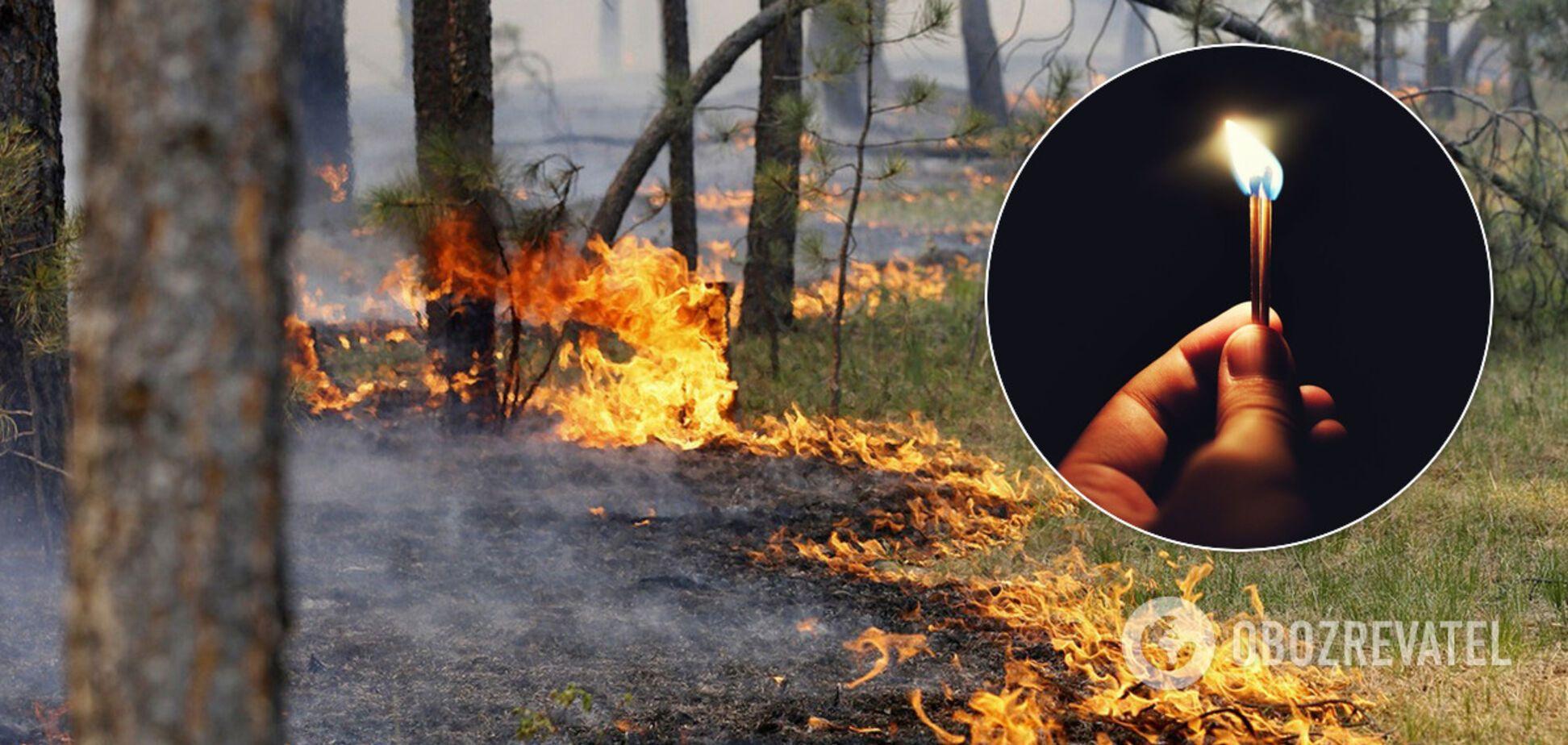 Сгорели сотни животных, гибнут люди: эколог рассказал об ужасающей ситуации в Украине