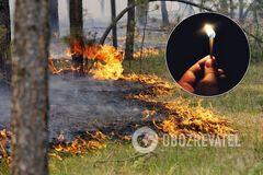 Згоріли сотні тварин, гинуть люди: еколог розповів про страхітливу ситуацію в Україні