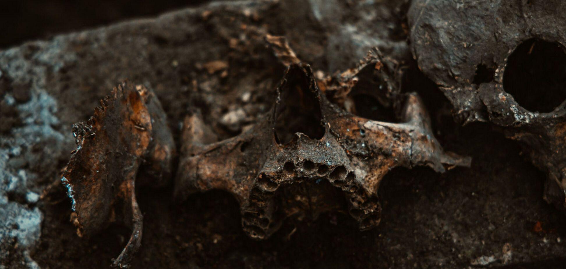 В Днепре возле жилого дома нашли человеческий череп и кости. Фото