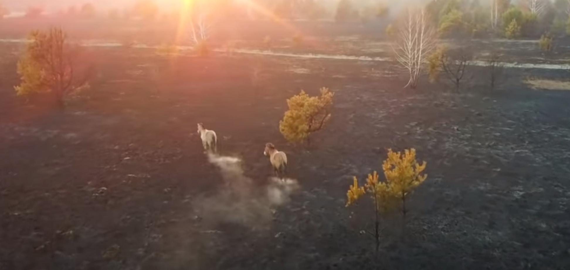 У Чорнобильській зоні тварини втікають від вогню