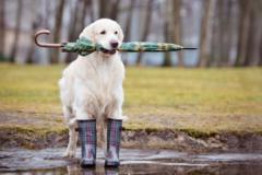 Украину на выходные накроет дождями: синоптик назвала области, которым не повезет