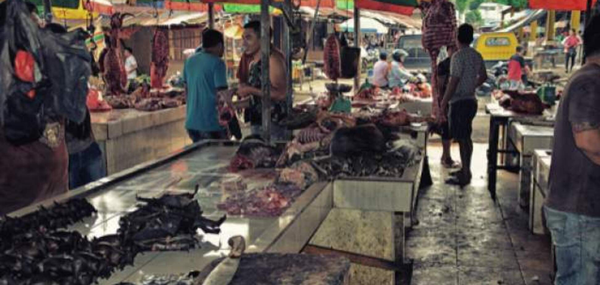 В Ухане открыли рынок с летучими мышами, от которых пошел коронавирус