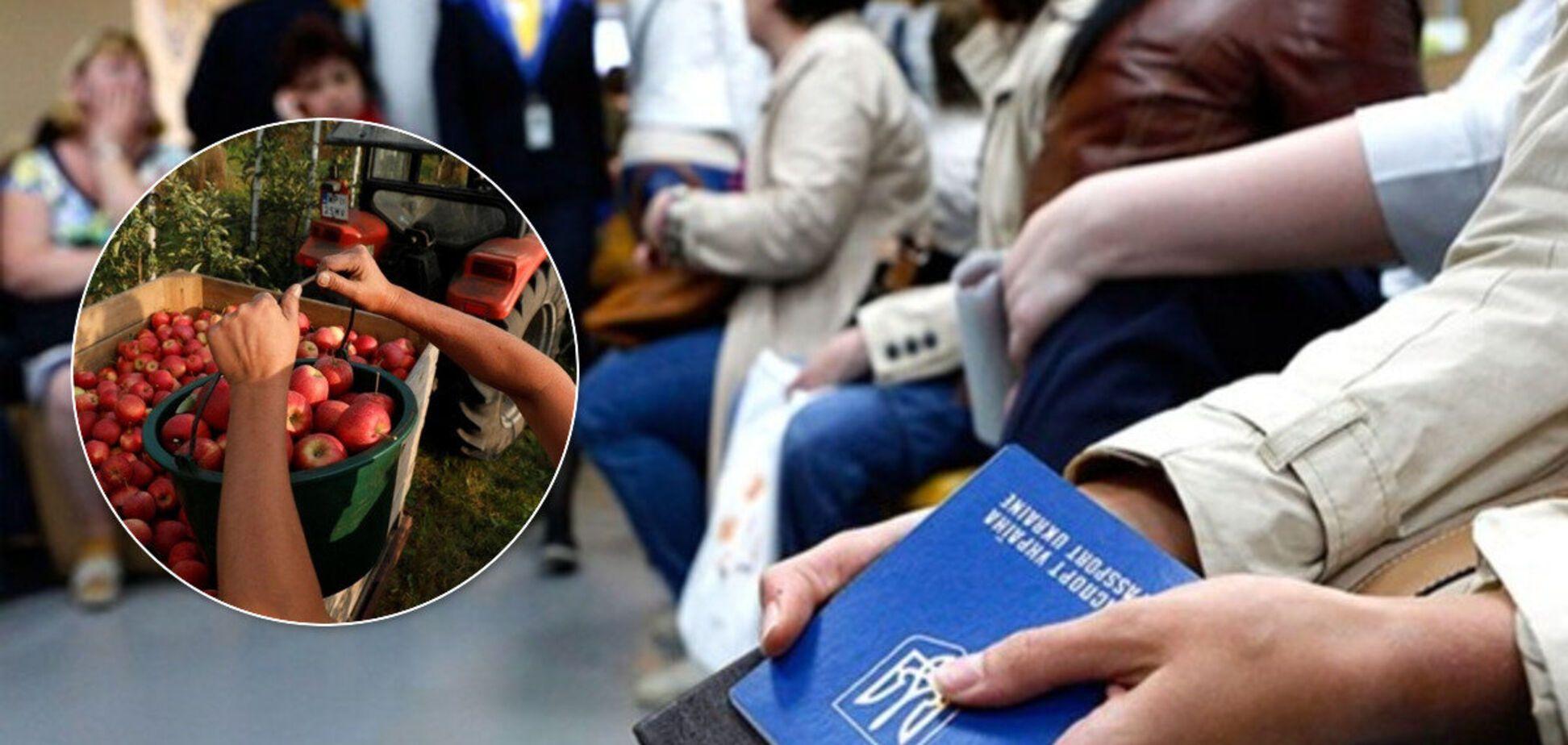 В ЄС не вистачає українських заробітчан: готові забирати чартерами і чекають на полях