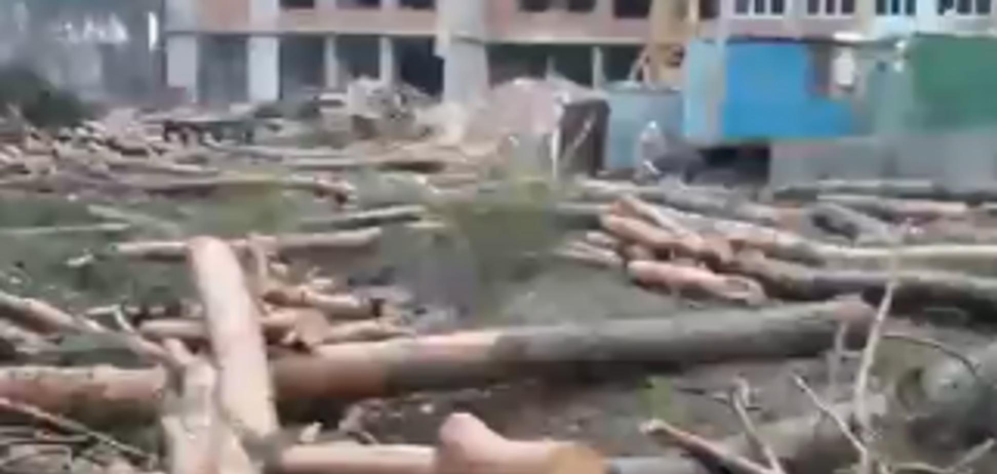 В Ирпене застройщик повалил лес в зеленой зоне: активисты 'отомстили'. Видео