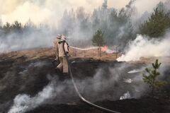 Диверсія: в МВС назвали одну з можливих причин пожеж на Київщині