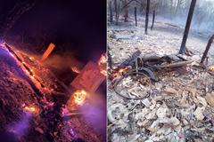 Леса на Житомирщине горят из-за добычи янтаря – Тышкевич