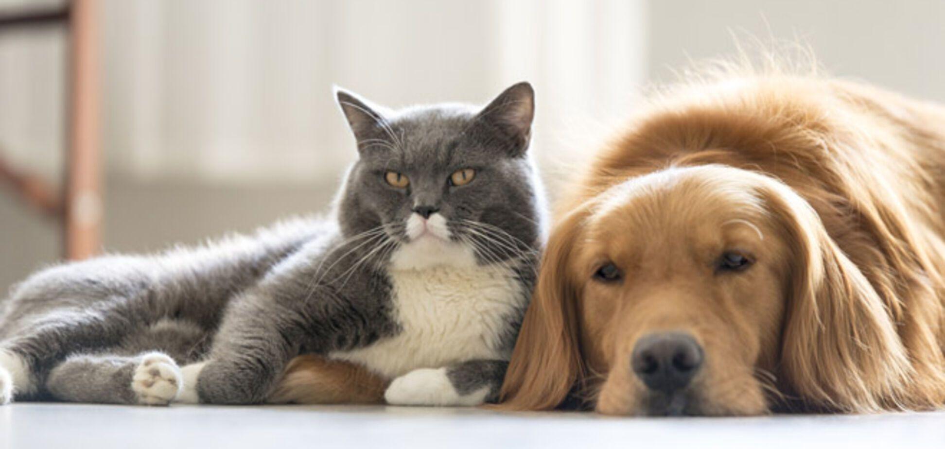 Коронавирус и домашние животные: ученые назвали, для кого он наиболее опасен