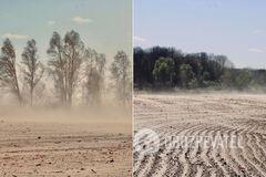 Украина из-за вырубки деревьев превращается в Египет: появились показательные кадры