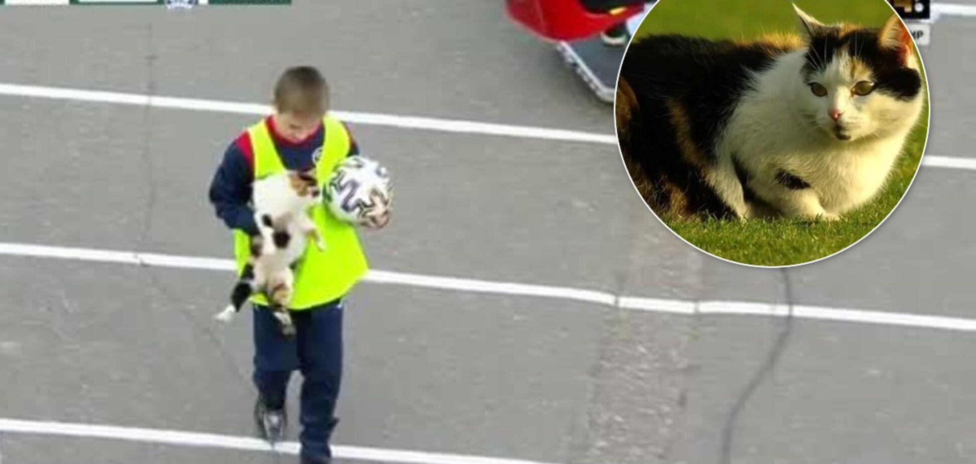 Товстий кіт спробував зірвати матч чемпіонату Білорусі з футболу