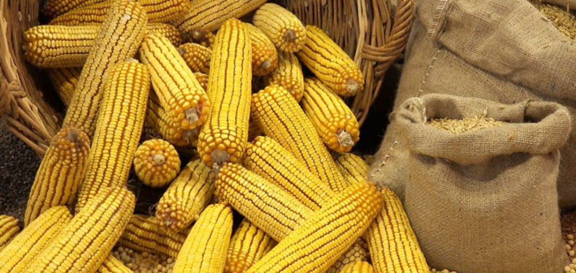 В Україні вирішили обмежити експорт кукурудзи