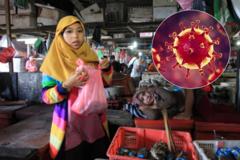 Хуже, чем в Китае? В Индонезии нашелся секретный рынок с летучими мышами. Фото 18+