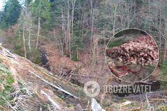 Трупна отрута зіпсує річку: в Карпатах знайшли гору решток тіл. Моторошні фото 18+