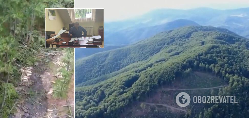 Топчиновники держлісництв на Закарпатті влаштували масштабну вирубку лісу. Відео