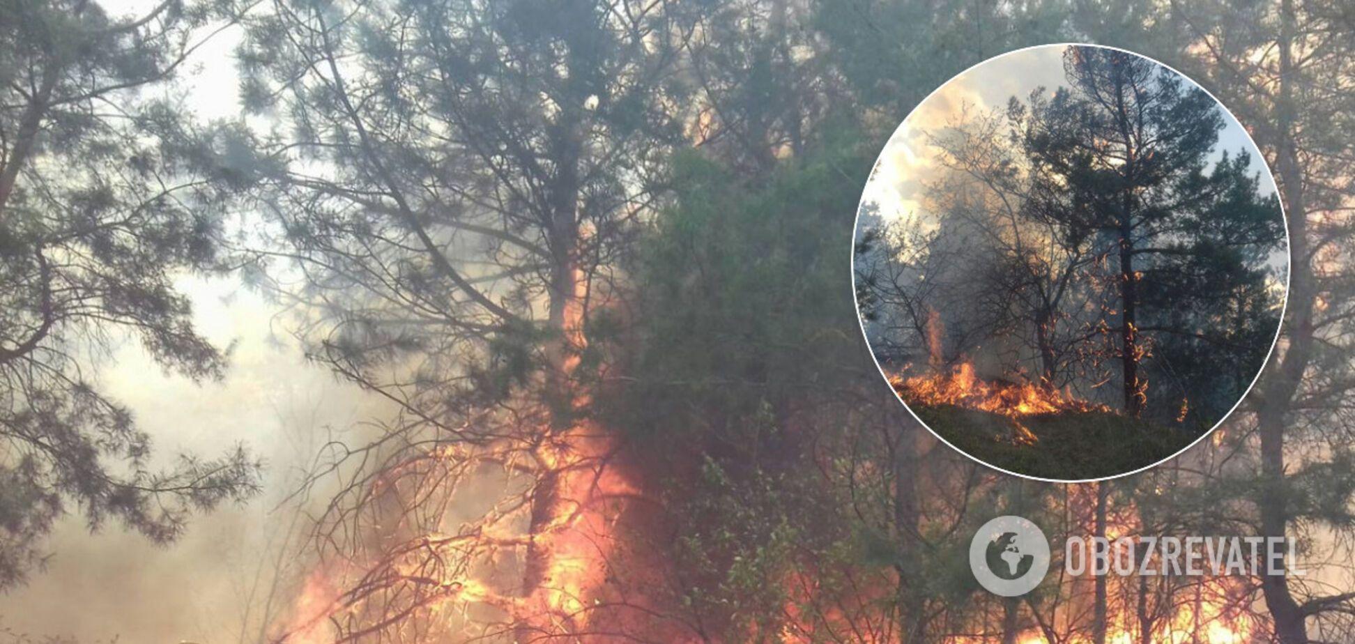 Під Одесою спалахнула масштабна лісова пожежа. Фото і відео