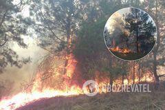 Под Одессой вспыхнул масштабный лесной пожар. Фото и видео