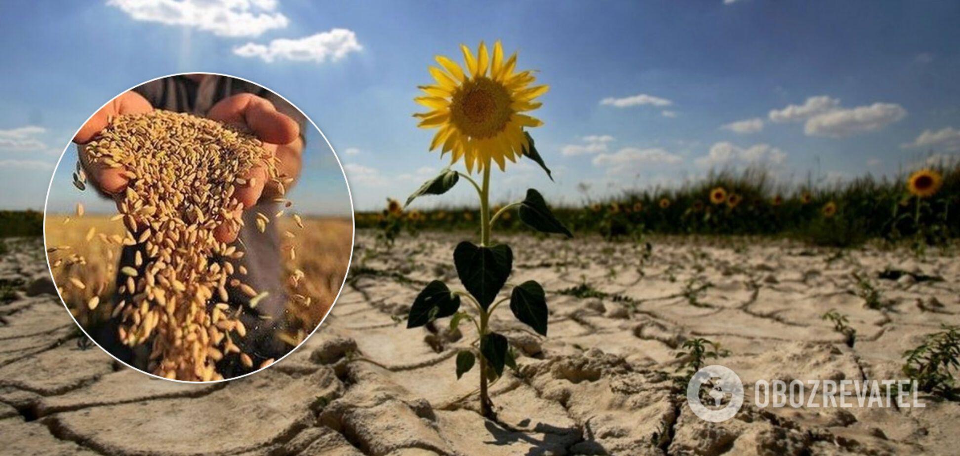 В Одеській області посуха знищила майже всі посіви: що тепер буде