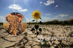 Украину ждет 10 лет засух и ураганов: продукты серьезно подорожают, воды не будет хватать. Эксклюзив