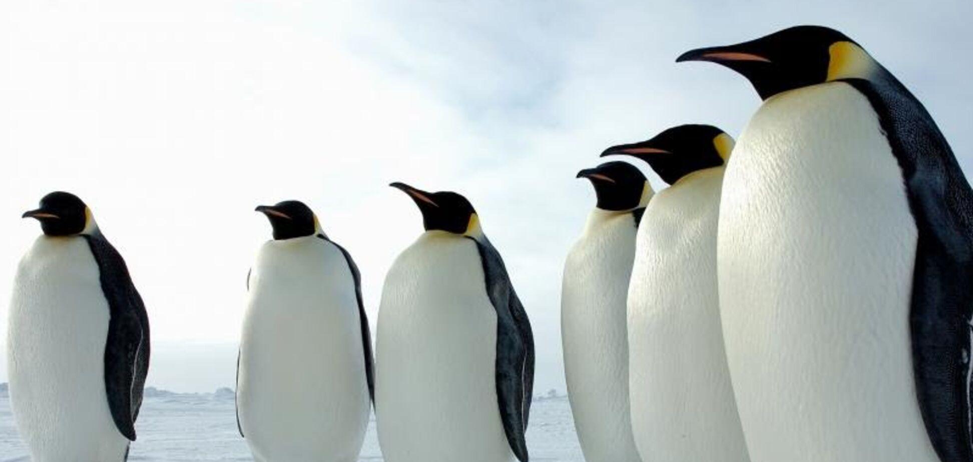 Интересные факты о пингвинах. Шпаргалка для урока биологии за 7 класс