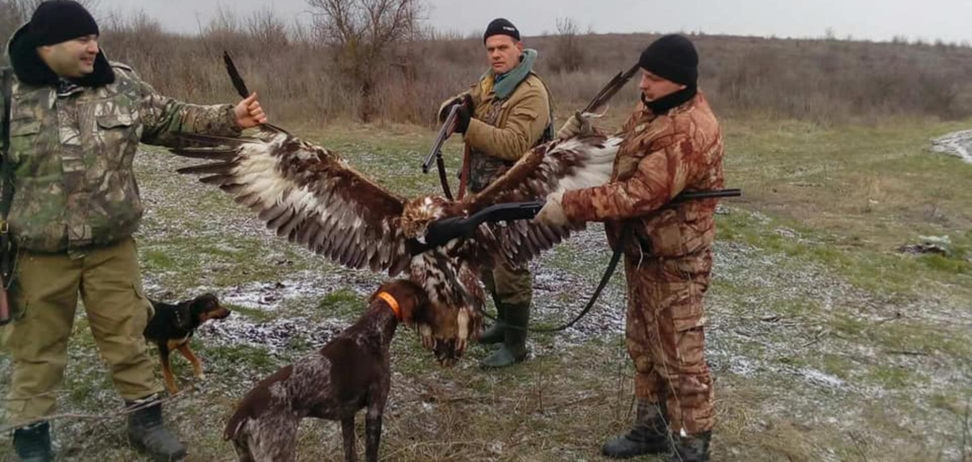 На Одещині поліцейські-браконьєри вбили червонокнижного беркута