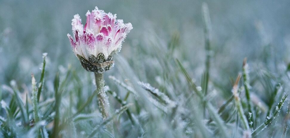 Европу накроет резкое похолодание с метелями и снегопадами: в Украине ударит мороз
