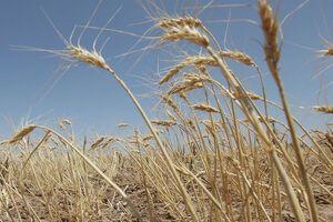 Потерял весь урожай из-за засухи: в Одесской области фермер совершил самоубийство