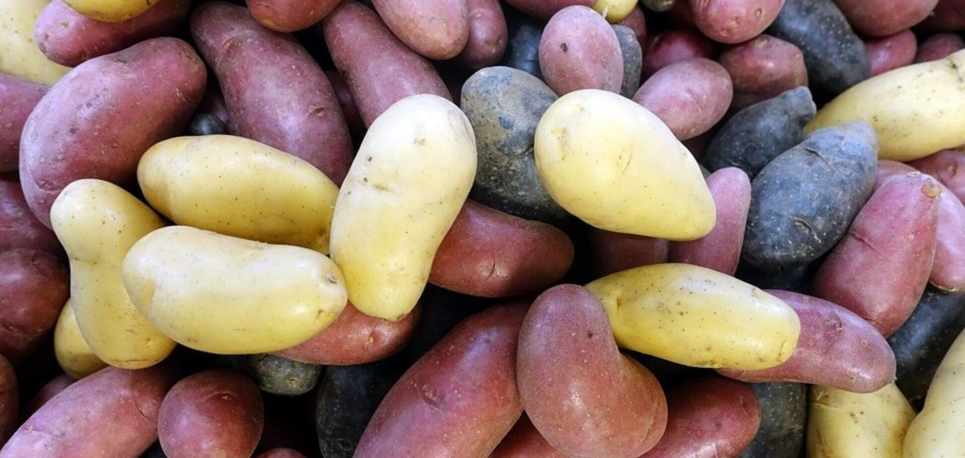 500 євро за кілограм: кілька невідомих фактів про картоплю
