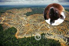 Где может возникнуть новая пандемия: ученые заявили об опасности для Амазонии