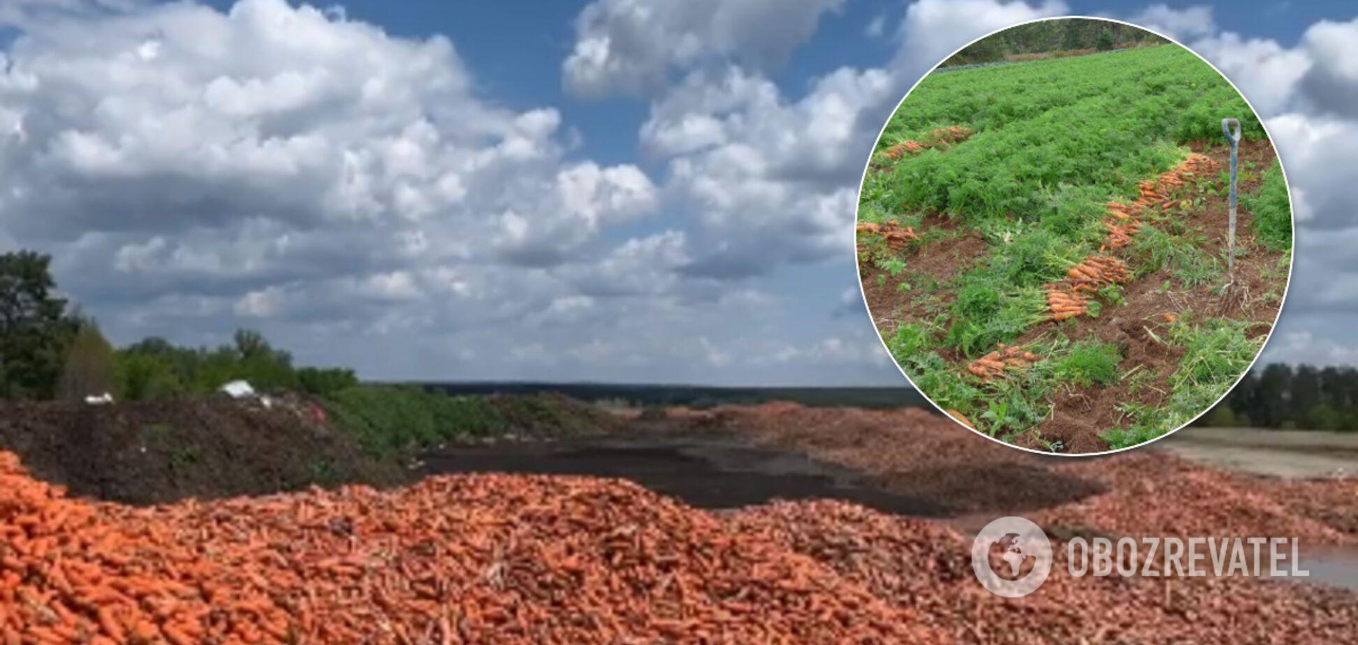 В Киевской области на свалку выбросили горы моркови: фото и видео шокировали украинцев