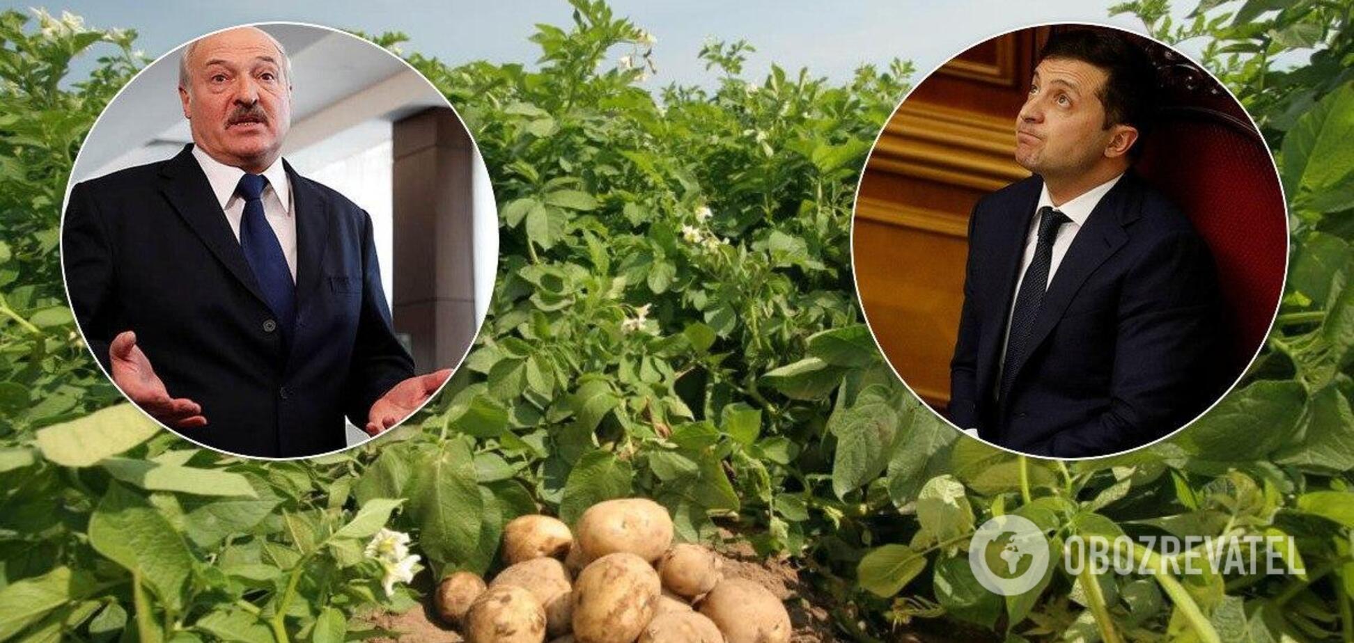 В Украине молодой картофель могут оставить гнить на полях