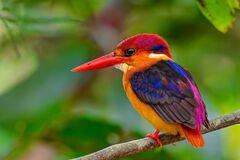 10 рідкісних птахів дивовижної краси: фотодобірка
