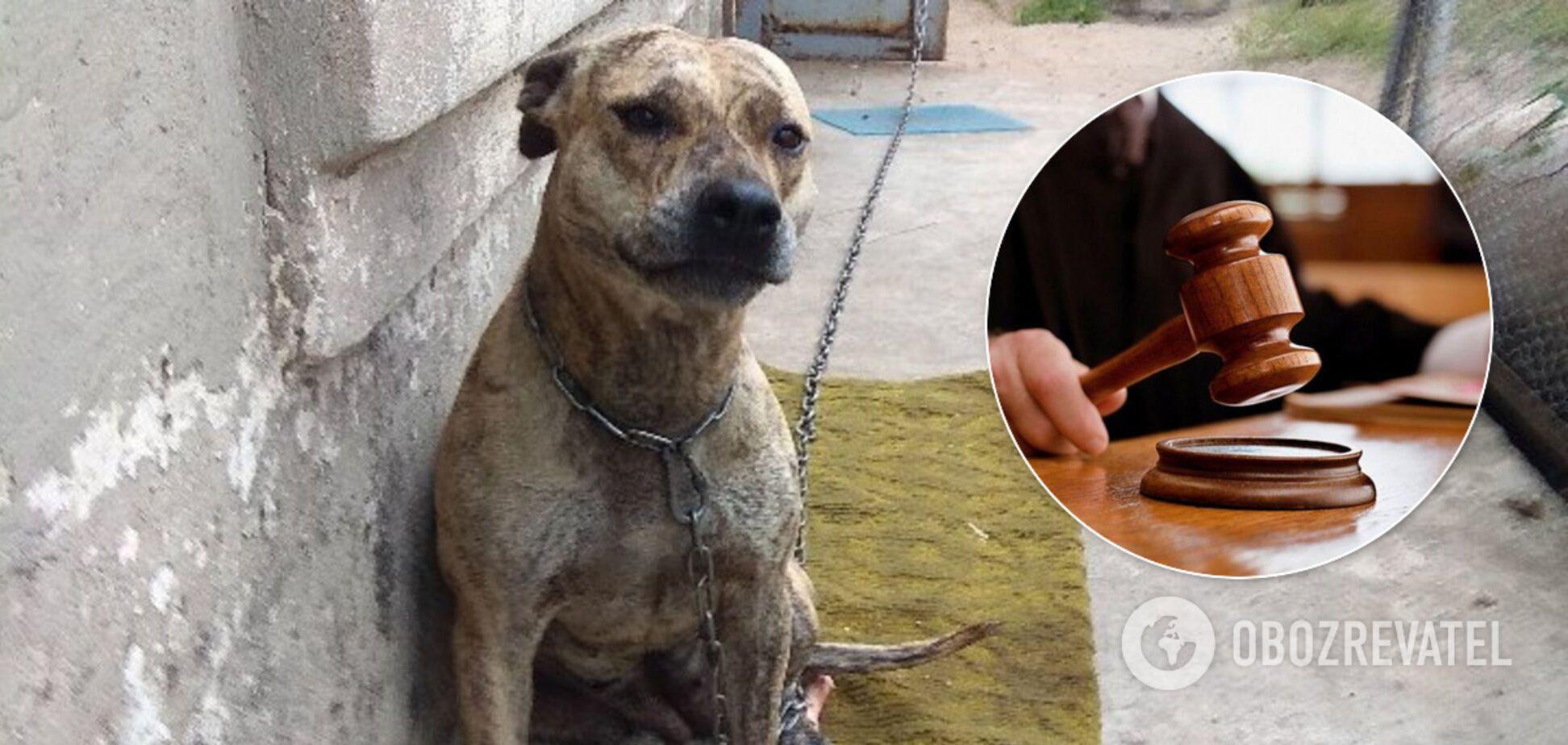 В Україні на аукціон виставили собак: міністр розповів передісторію вірусного фото