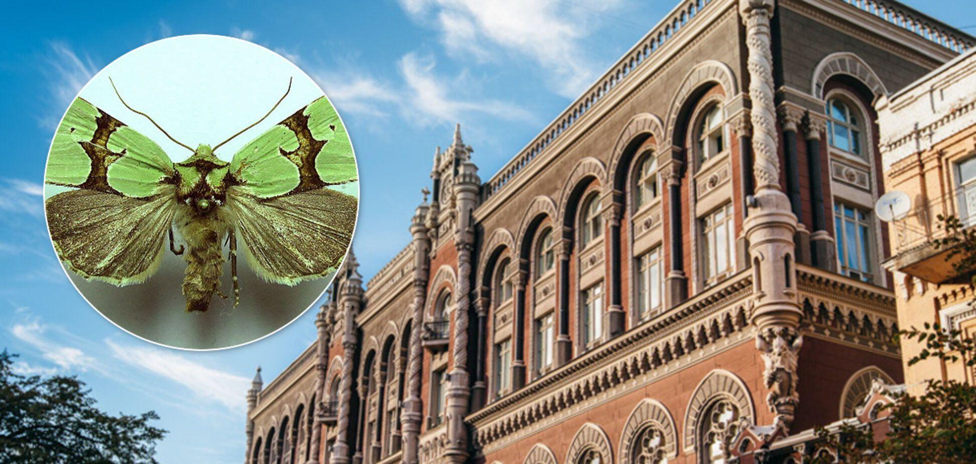 НБУ введет в оборот новую монету, посвященную ночной бабочке: как выглядит