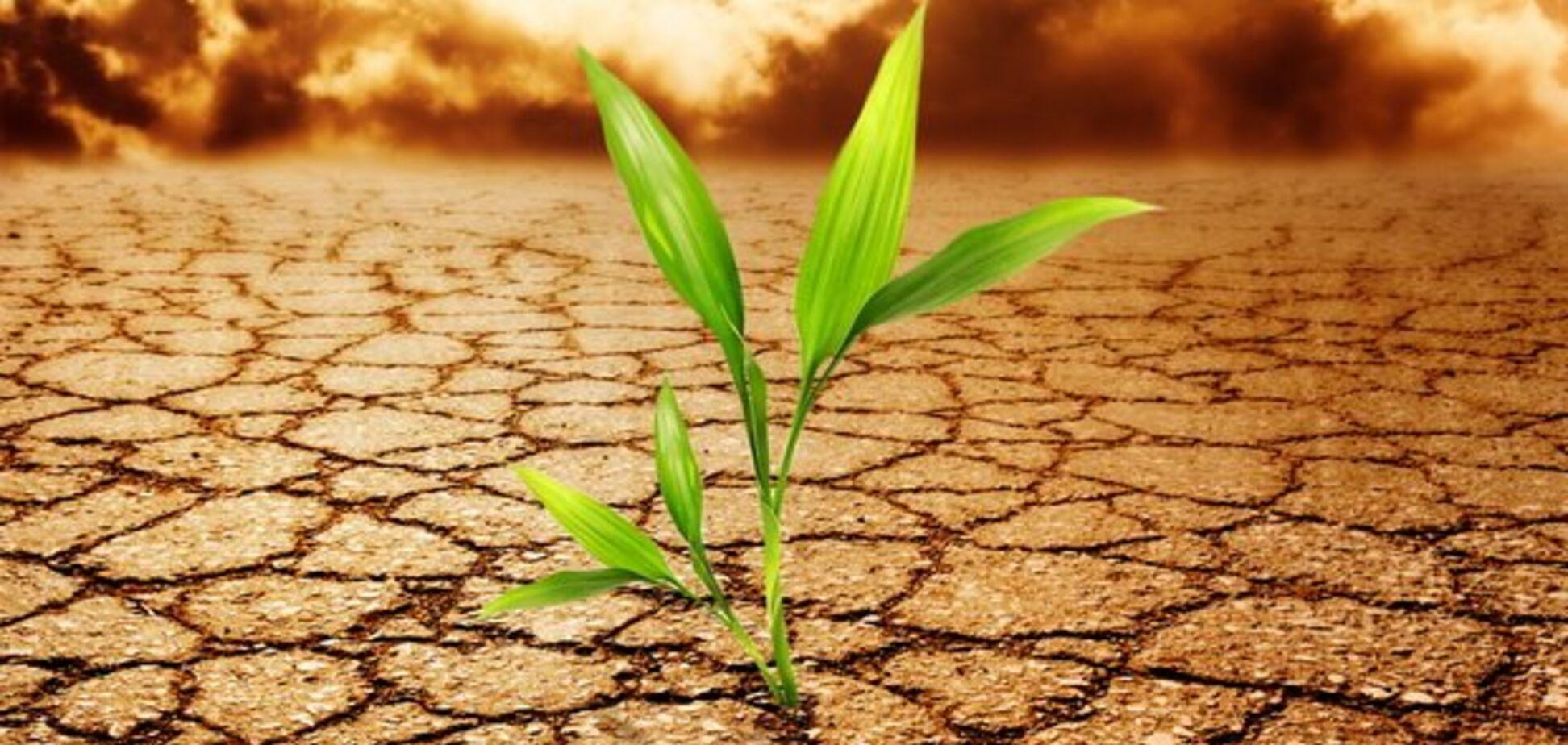 В Украине 10 лет будет засуха: что будет с ценами на продукты