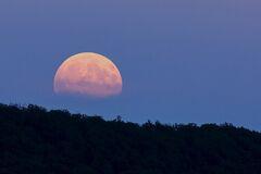Цветочная луна 2020: что нужно делать и как загадать желание