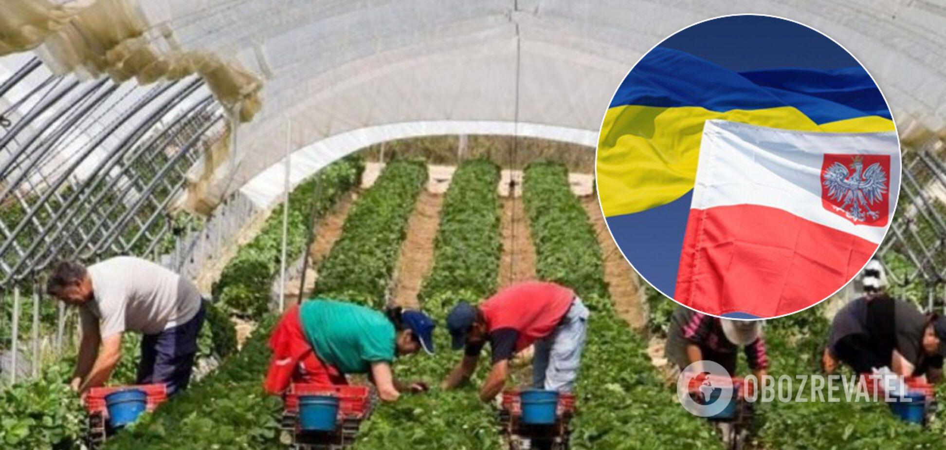 В Польше признали зависимость своей экономики от украинских заробитчан
