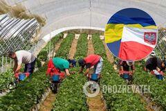 У Польщі визнали залежність своєї економіки від українських заробітчан