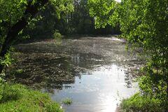 Под Черниговом исчезло легендарное озеро, где принимали христианство: опубликованы фото