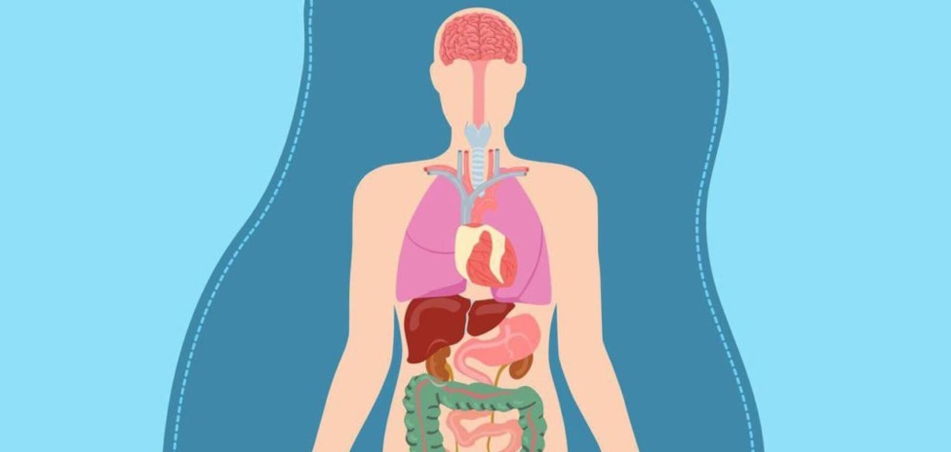Система органов тела человека: интересные факты
