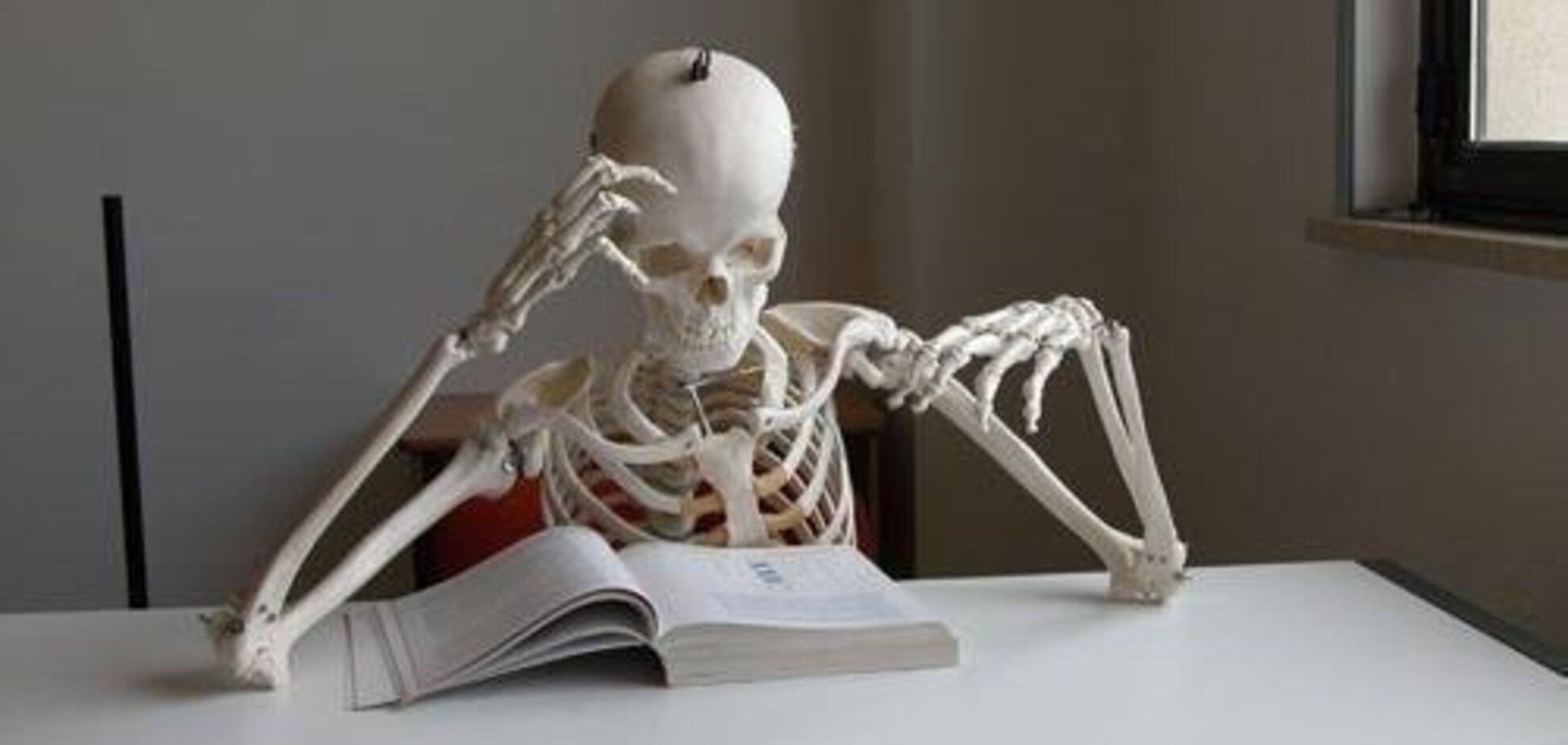 Скелет человека: строение