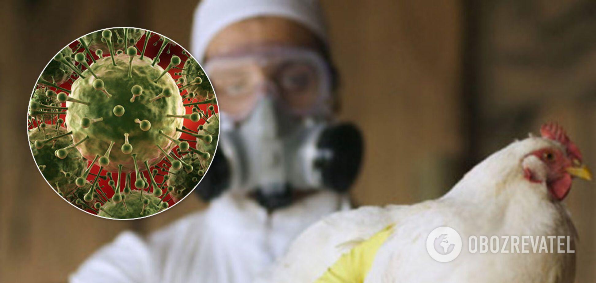 Слідом за COVID-19 світу загрожує епідемія пташиного грипу. Хто в зоні ризику