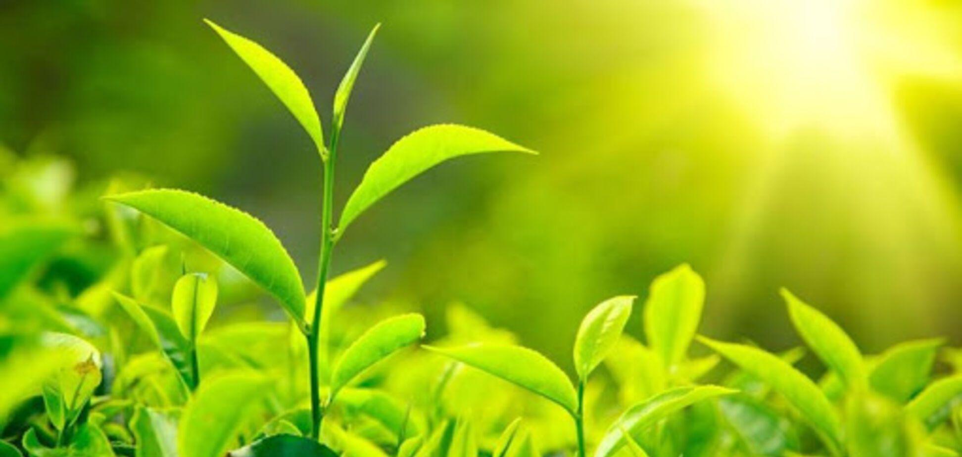 Фотосинтез у растений: световая и темновая фазы