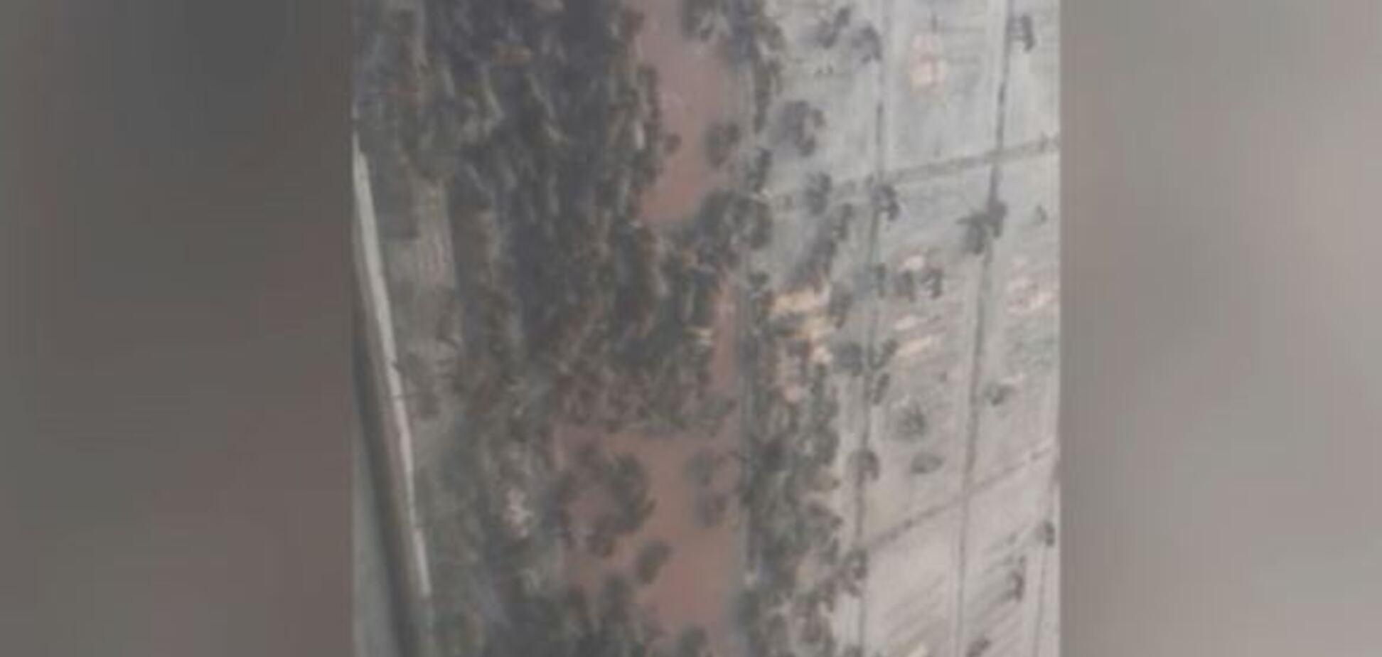 В Днепре тысячи пчел оккупировали квартиру женщины. Видео
