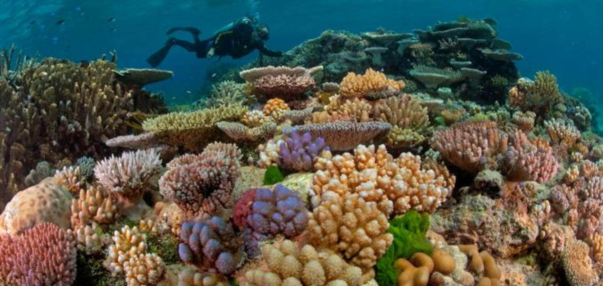 Коралловый риф: виды и интересные факты
