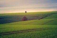 В Україні спрощено термін реєстрації земельних ділянок